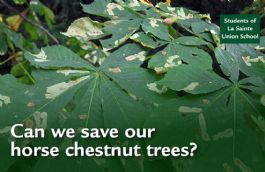 The Horse Chestnut Project